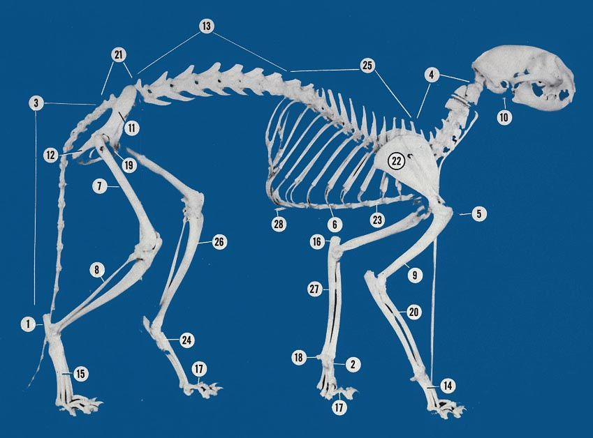 cat skeleton...a stray cat arrived on my door & i can feel most of ...
