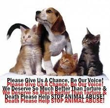 Please don't abuse your animal help one today who needs a another chance if they suffer, u suffer save an animal today!!  Adopt a pet who will be loving for u and your children