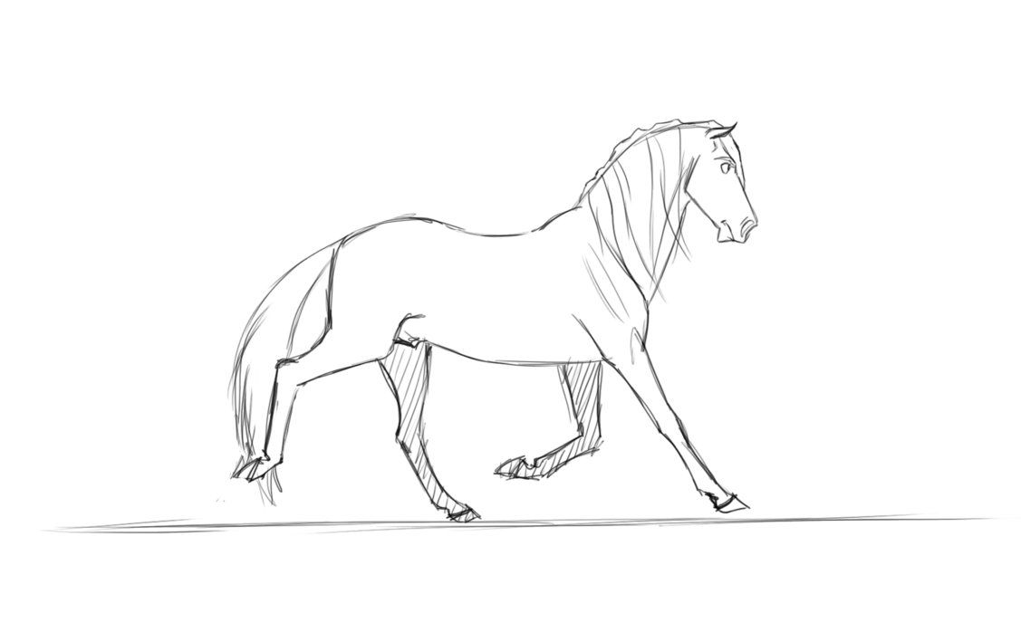 Interactive Horse Anatomy Skeleton And Muscles Homeschool 5th