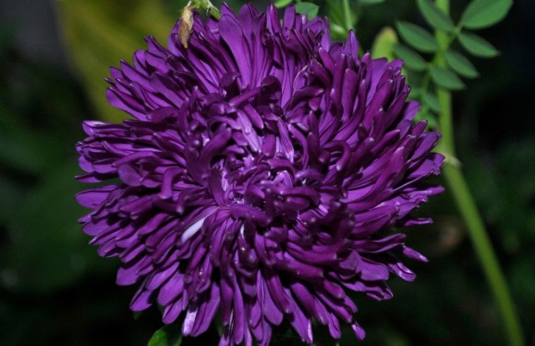 34 Different Types Of Purple Flowers For Your Garden Pinterest