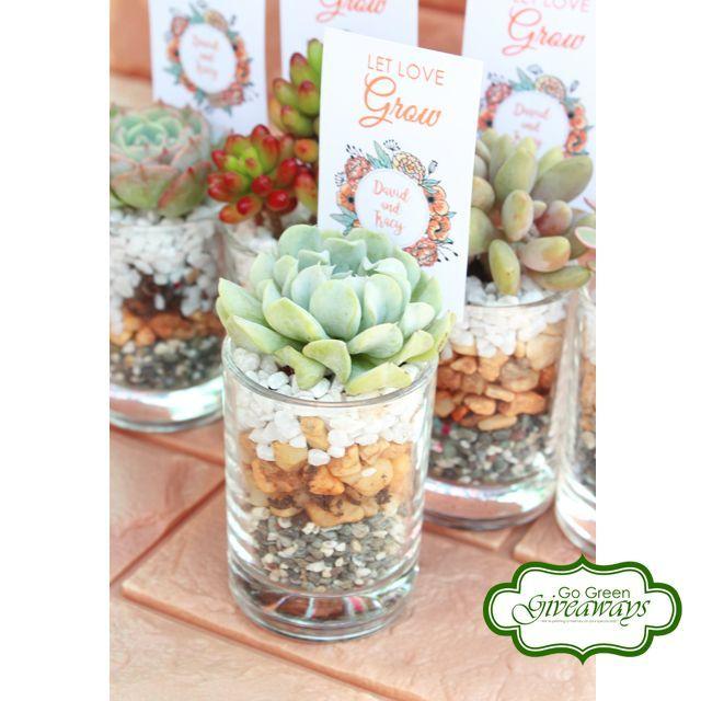 Party Needs Succulents Wedding Favors Coco Pots Rose Cactus