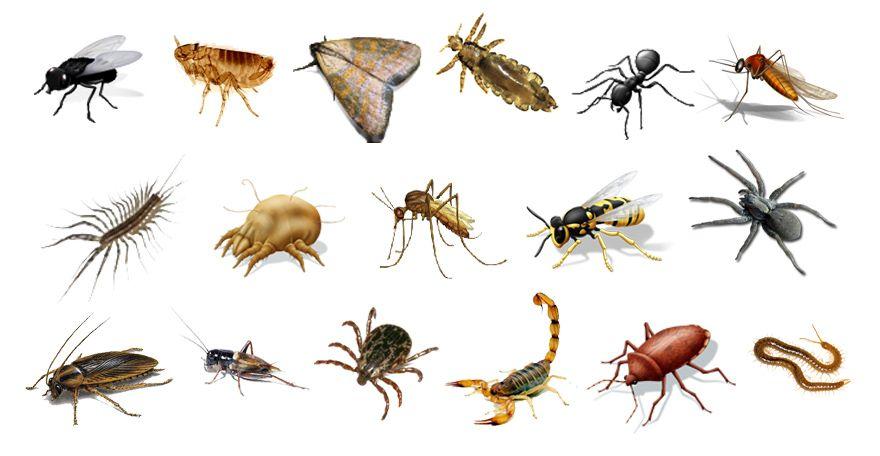 termita clases - Buscar con Google   Insectario   Pinterest   Mas de ...
