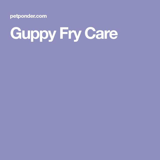 Guppy Fry Care   Guppy, Fries, Beautiful fish