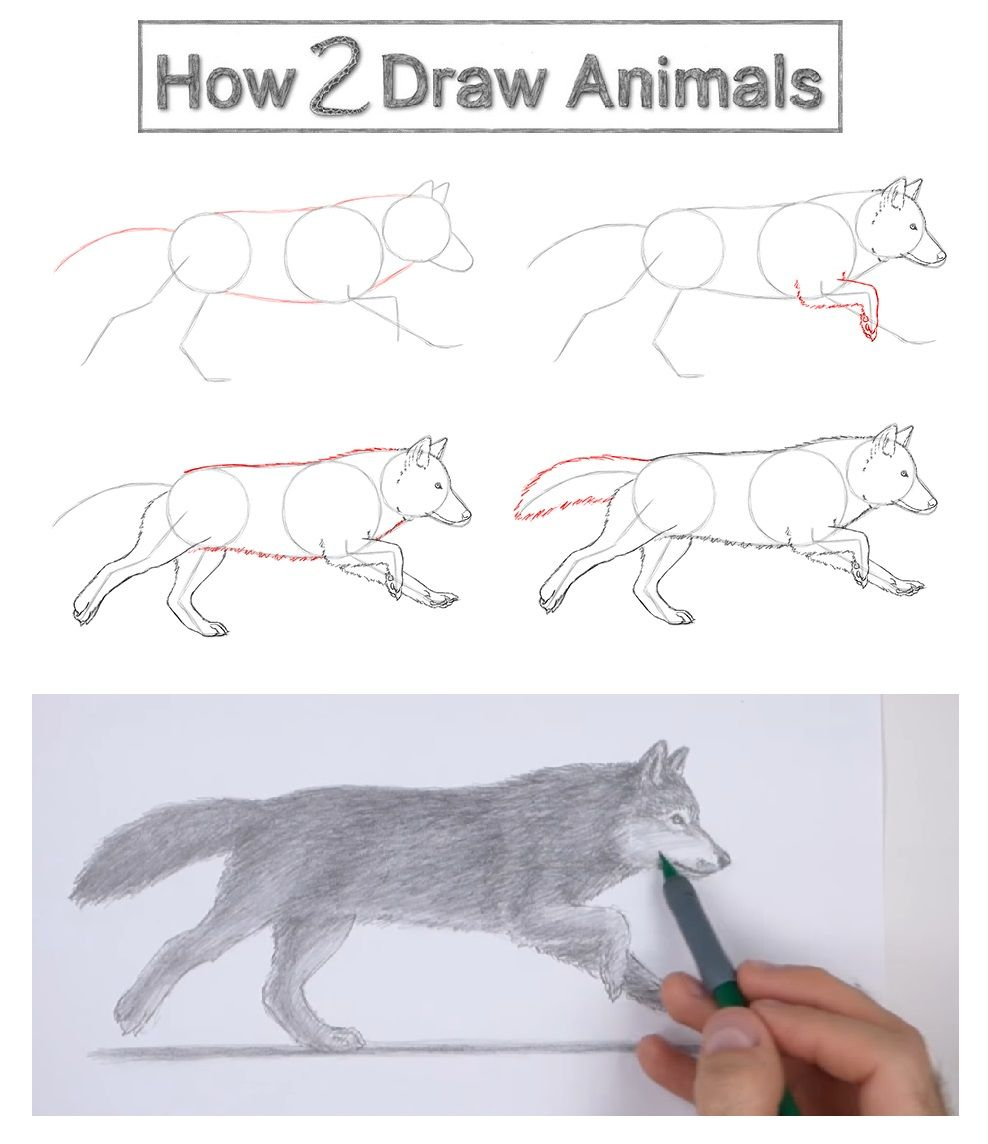 Photo of How to Draw a Wolf (Running) VIDEO & Step-by-Step Pictures
