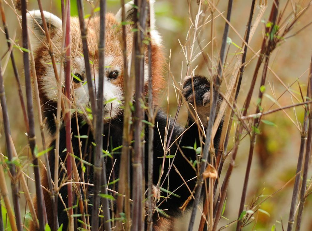 Peek a boo! Photo by Martin Hainsworth — National Geographic Your Shot