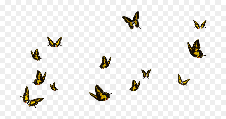Butterfly Flying Transparent Background Hd Png Download Butterflies Flying Butterfly Picsart Png