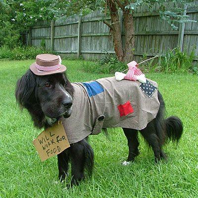 2010 Halloween Pet Parade Pet Halloween Costumes Pet Parade