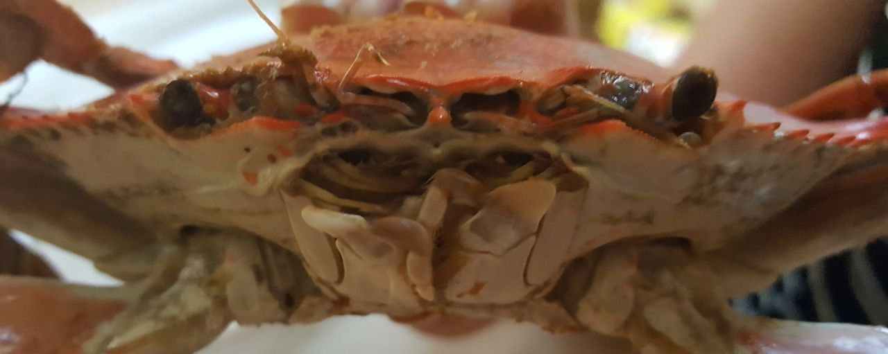 How To Eat A Steamed Crab Different Sizes Of Bue Crabs How To Pick A Crab Steamed Crabs Blue Crabs Eat Crab Steamed Crabs