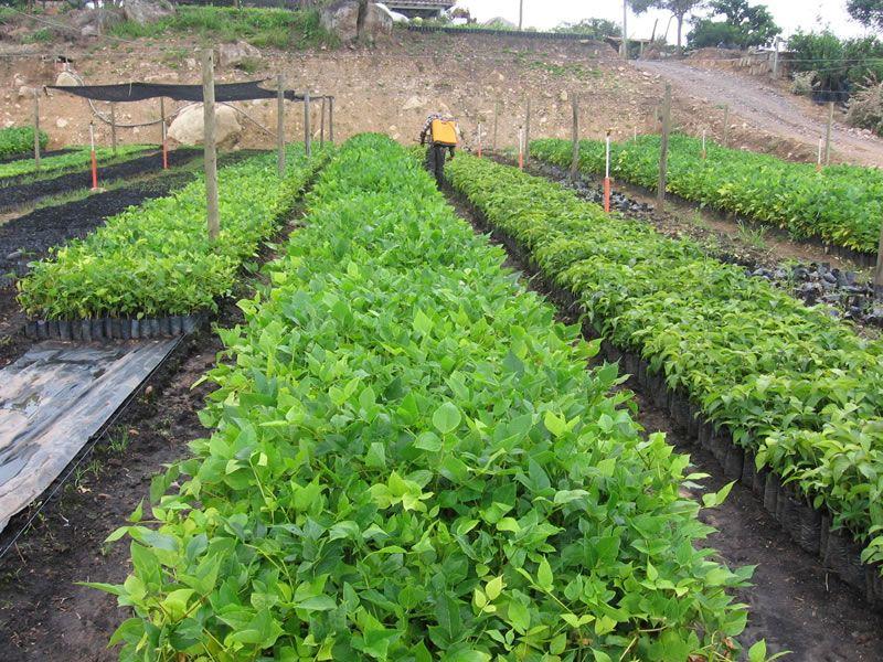 Resultado de imagen para viveros forestales orqu dea for Preparacion de sustrato para viveros forestales
