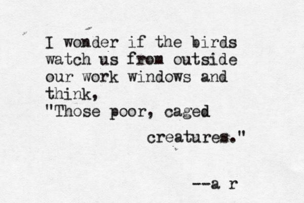 I wonder if the birds watch us from our work windows and think