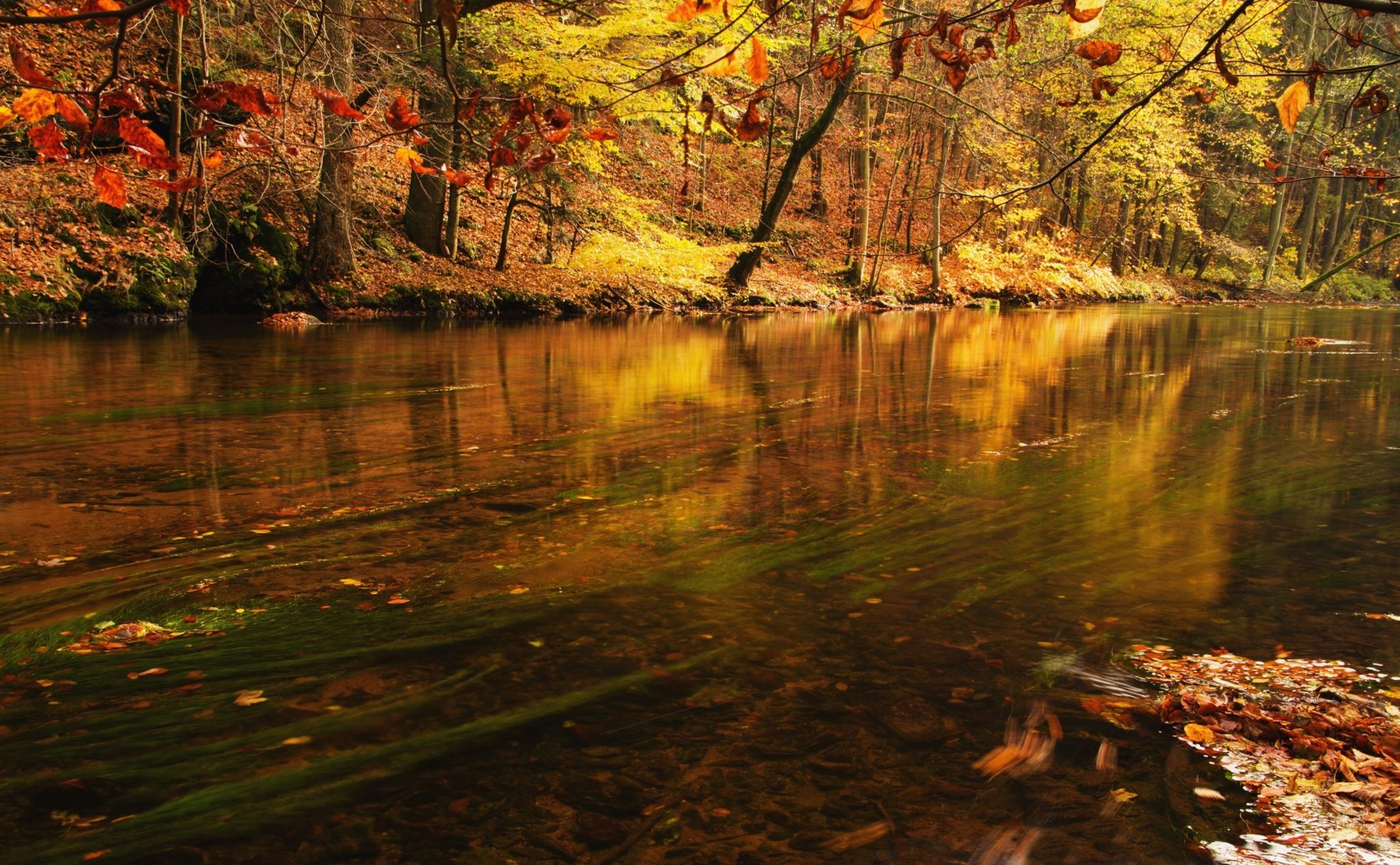 Colored River By Miloslav Janovsky 500px Autumn Trees Country Roads River Wallpaper autumn road rays alley trees