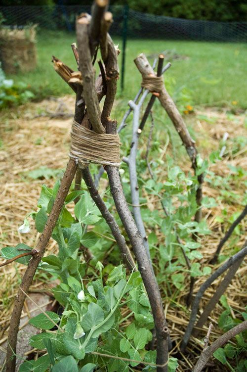 Have To Remember This For When My Peas Start Growing Pea Trellis Garden Vines Plants