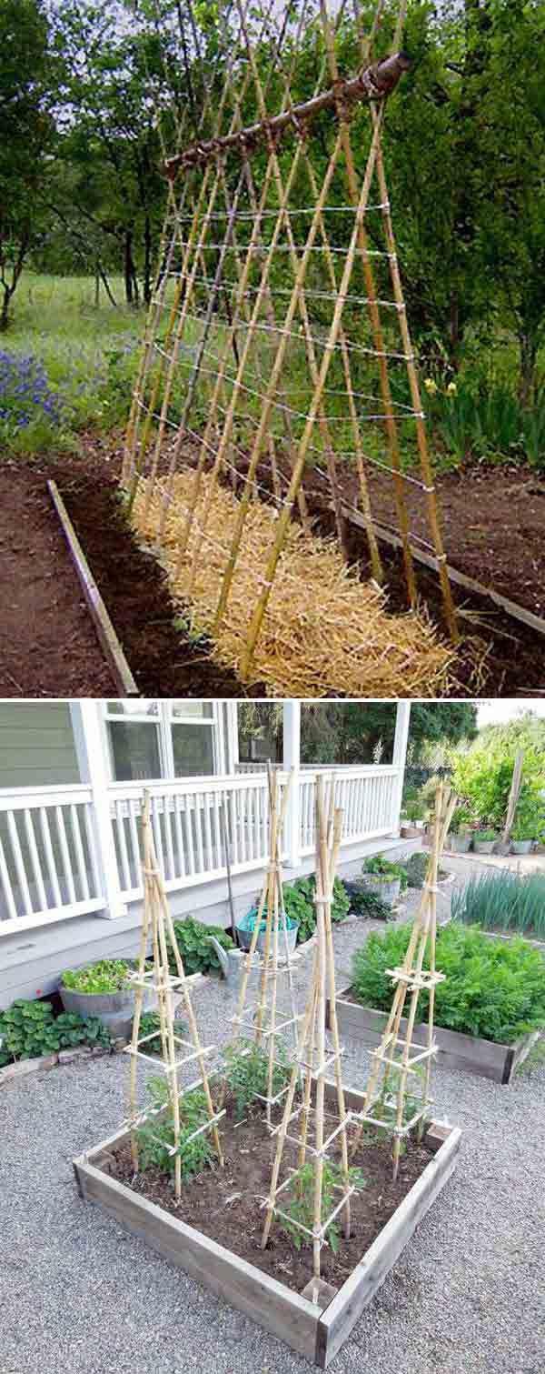 Comment Faire Pousser Bambou 14 manières d'utiliser les bambous dans votre jardin - page