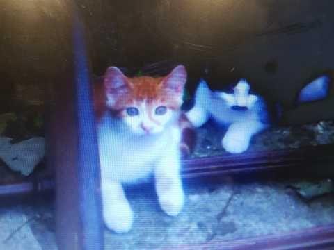 Lovely Kittens For Sale St Helens Merseyside Pets4homes Kitten For Sale Kittens St Helens