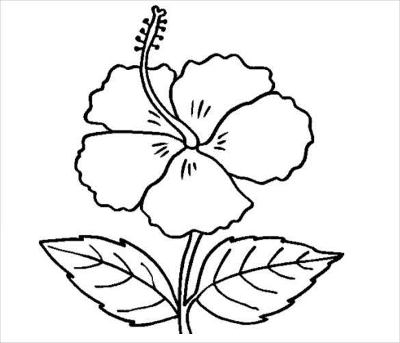 Fantastis 13 Gambar Sketsa Bunga Asoka Download Cepat Himpunan Contoh Mewarna Gambar Bunga Yang Gerani Flower Outline Hibiscus Outline Flower Coloring Pages