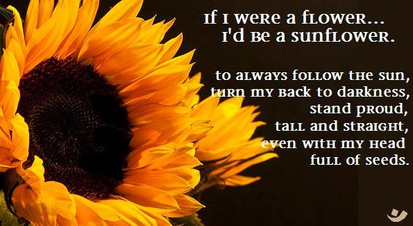 If I Were A Flower I Would Be A Sunflower To Always Follow The Sun Turn My Back To Darkness Stand Proud Sunflower Pictures Sunflower Happy Flowers