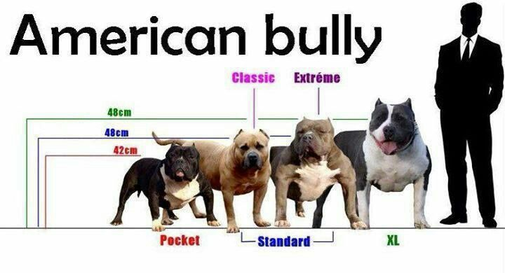 Different sizes of bullies.