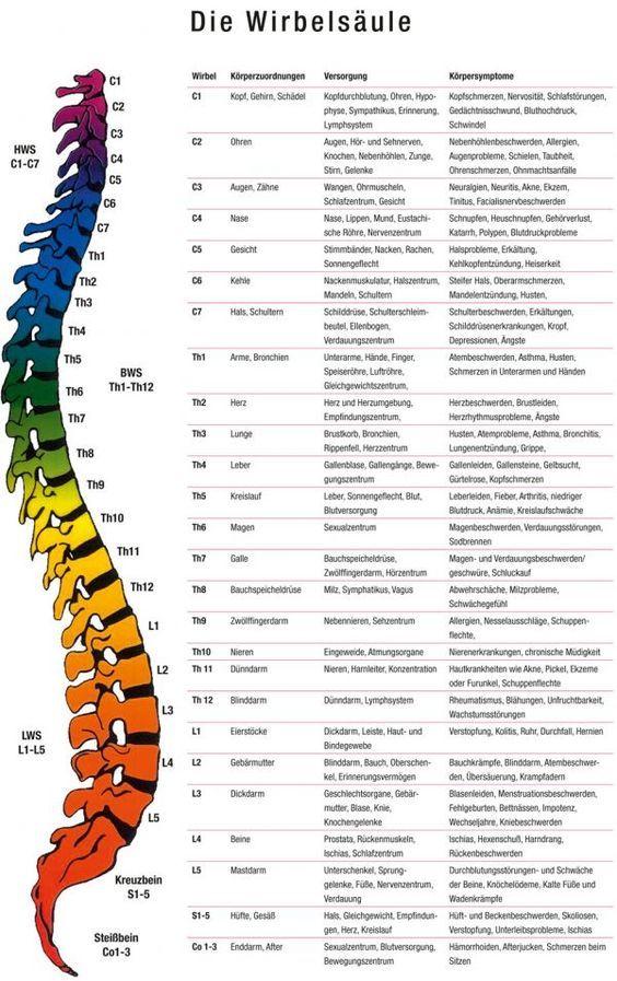 Wirbelsäule und Organe | Anatomie | Pinterest | Wirbelsäule ...