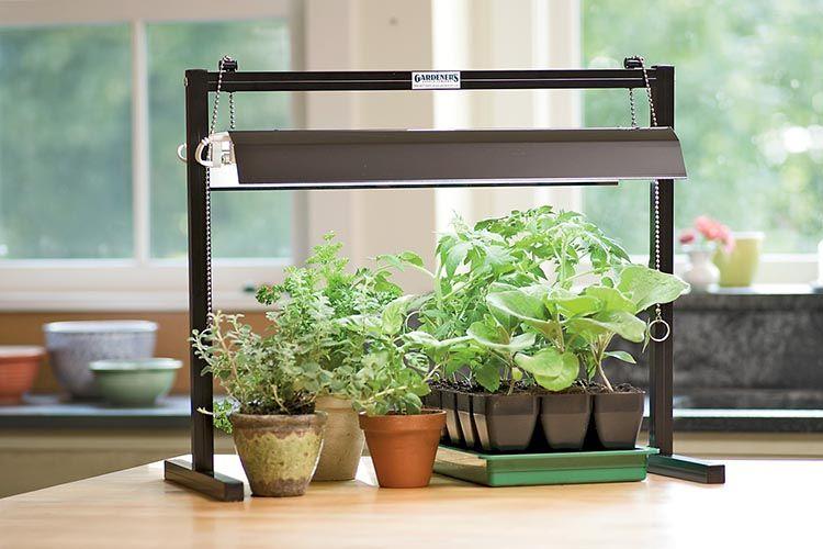 Mini Indoor Herb Garden Under Light Indoor Grow Lights 400 x 300