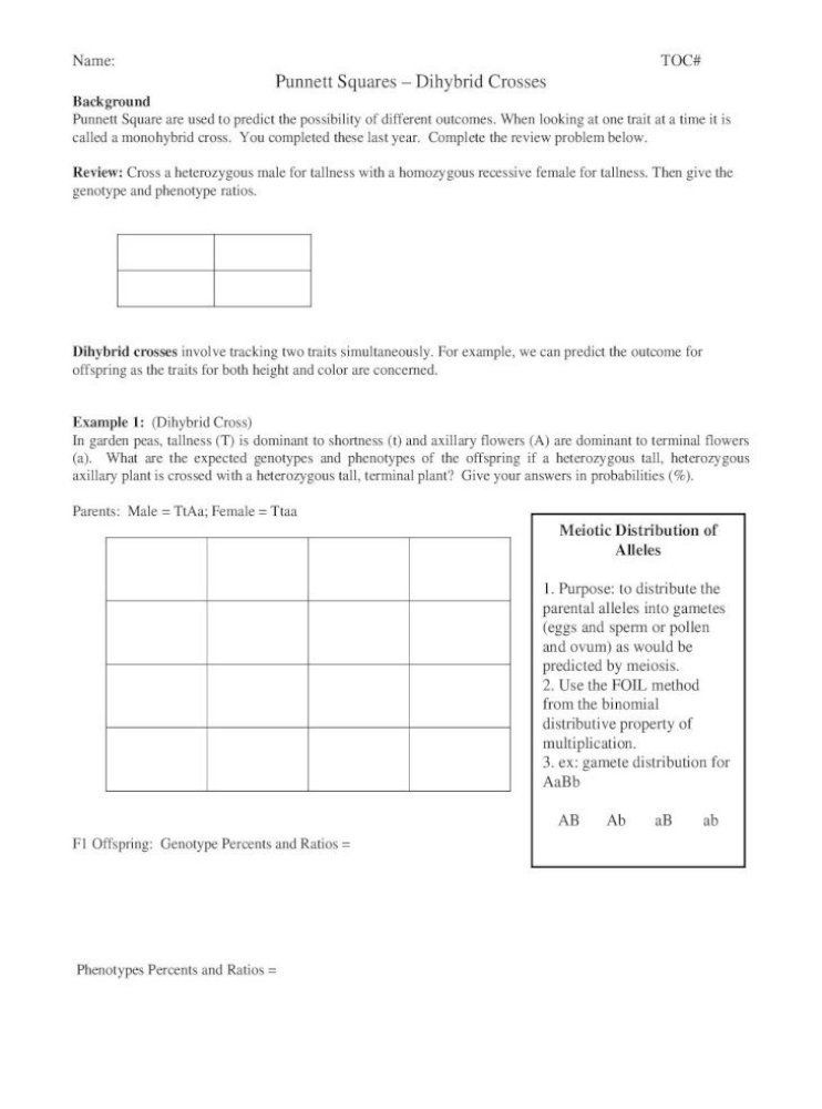 Genotypes and Phenotypes Worksheet Answers Squares