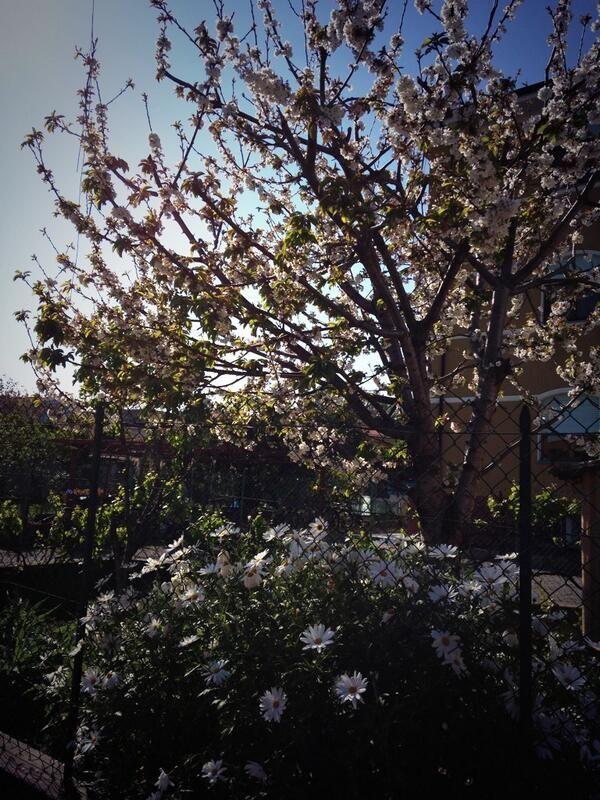 """""""La #primavera fiorisce a #DianoMarina nel #golfodianese #liguria"""". Foto del Comune di Diano Marina @comunedianom"""