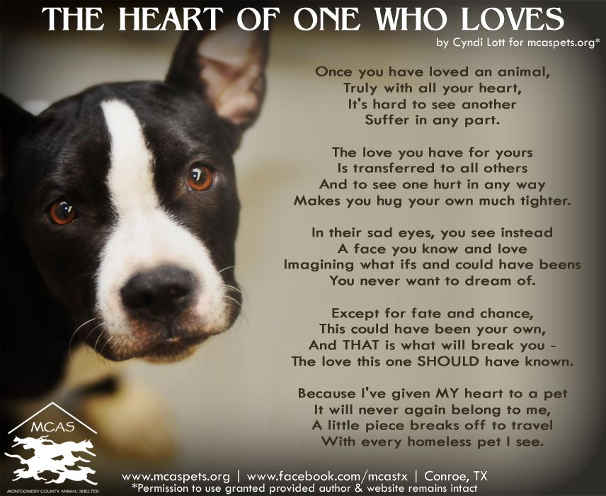 Pin By Renee Watkins On Animals Group Board Dog Quotes Animals Dogs