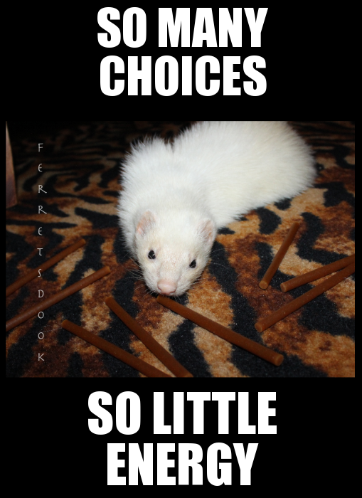 pin ferret meme on - photo #36