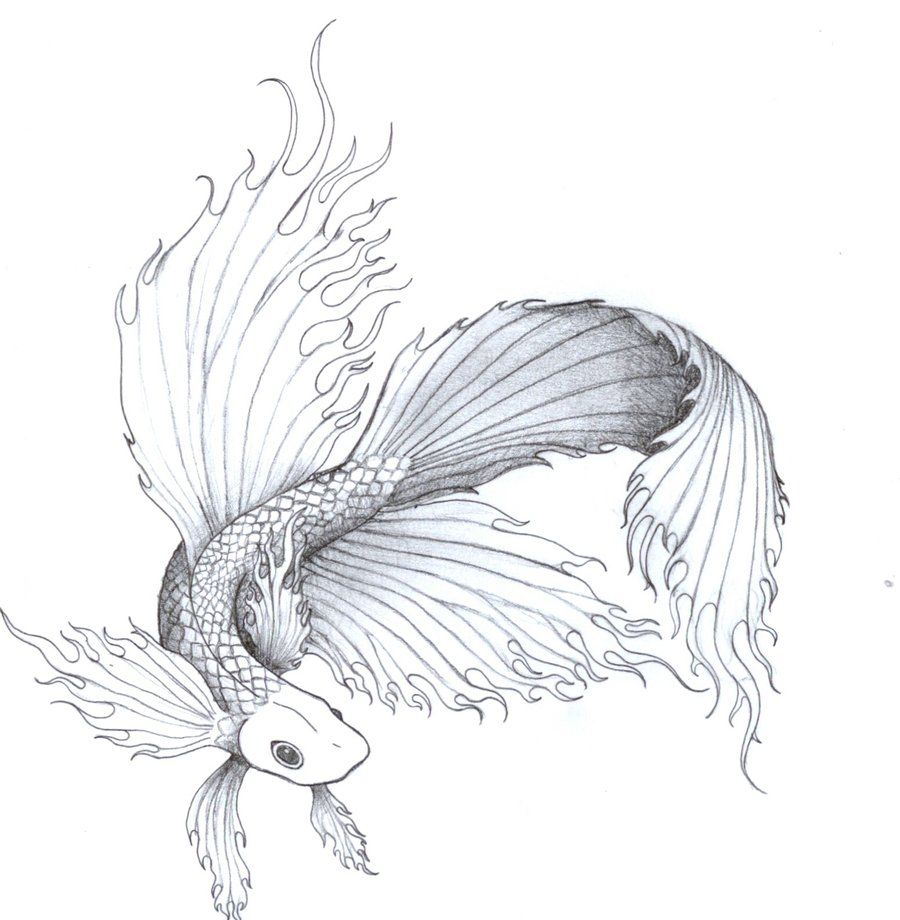 Free Beta Fish Tattoo Designs Fighting Fish By Chakra San Designs Interfaces Tattoo Design Design Betta Fish Tattoo Fish Drawings Beta Fish Drawing