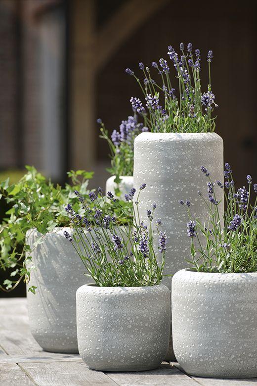 Concrete Round Pots Adamchristopherdesign Co Uk Potted Lavender Lavender Garden Garden Containers