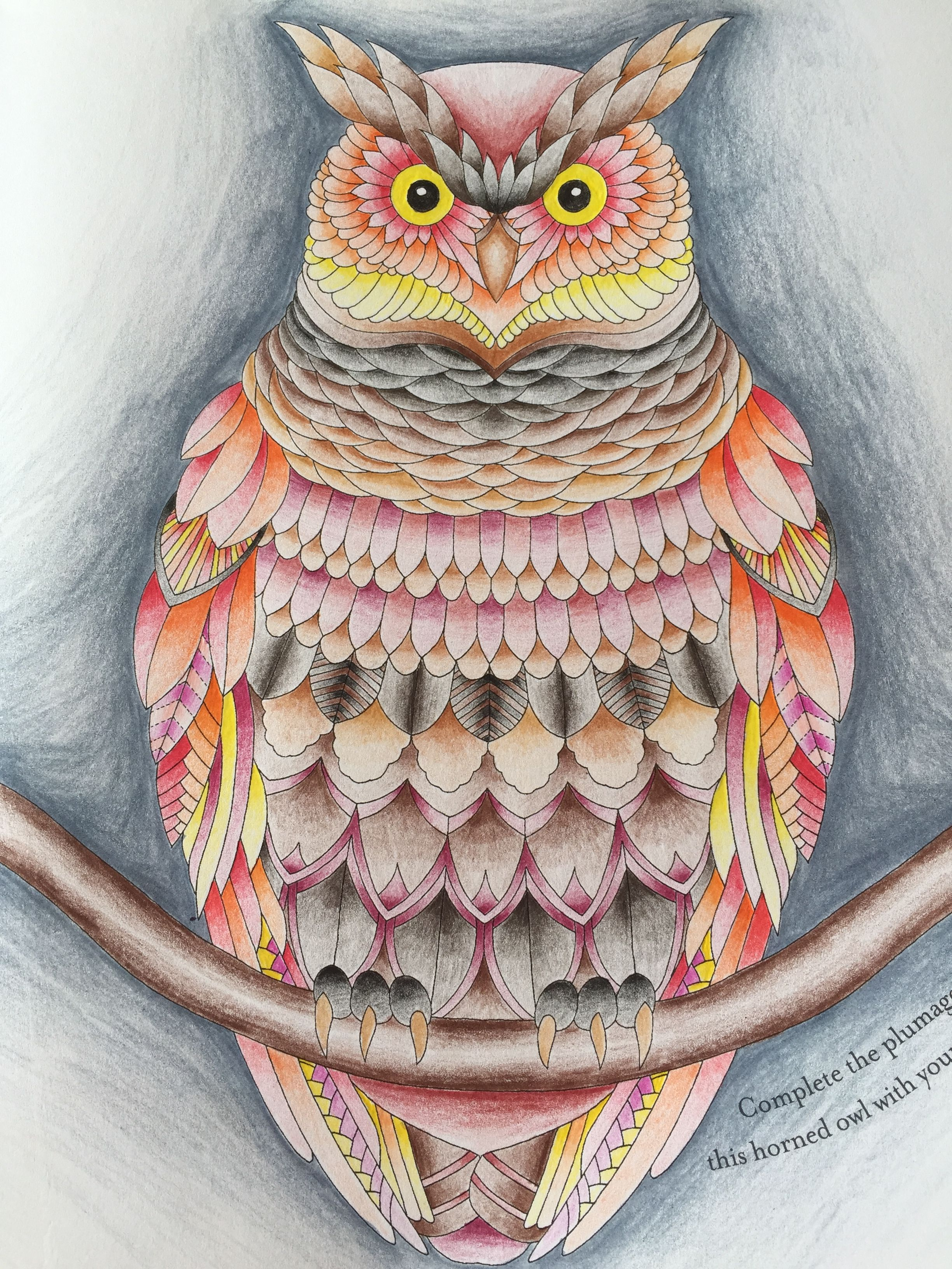 Millie Marotta Owl Tropical Wonderland
