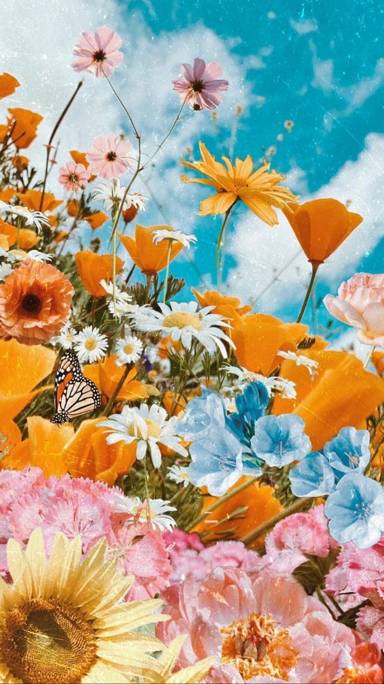 11 11 On Twitter Beautiful Wallpapers Backgrounds Flower Phone Wallpaper Beautiful Wallpapers