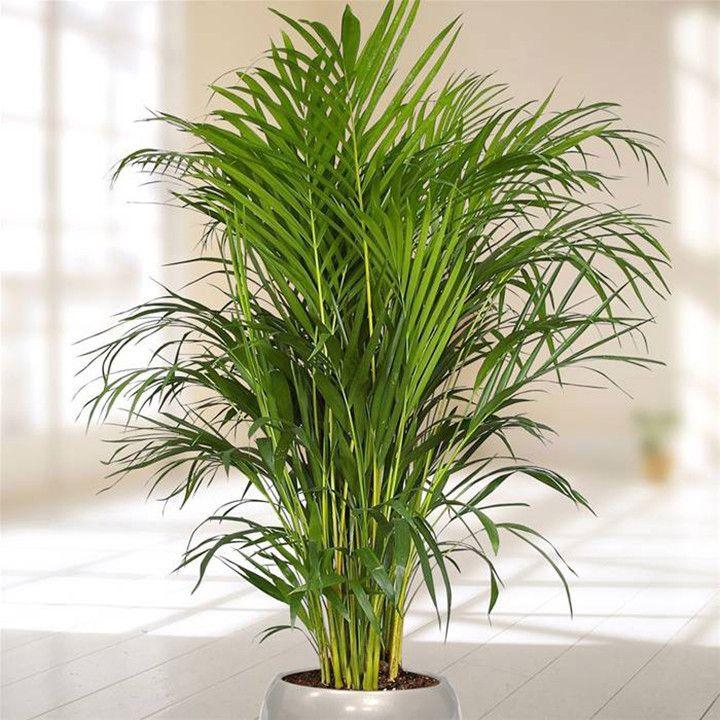 22 plantas perfeitas para cultivar em apartamentos - Plantas de sombra ...