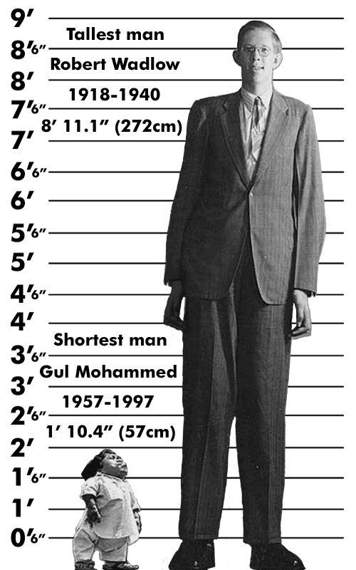 Giant midget short shorter shortest talking tall taller tallest