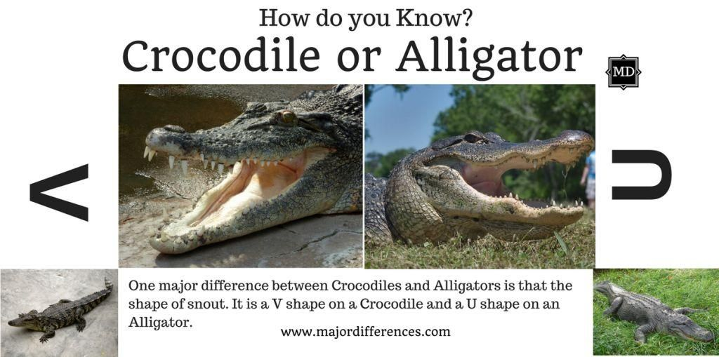 how to tell difference between alligator and crocodile