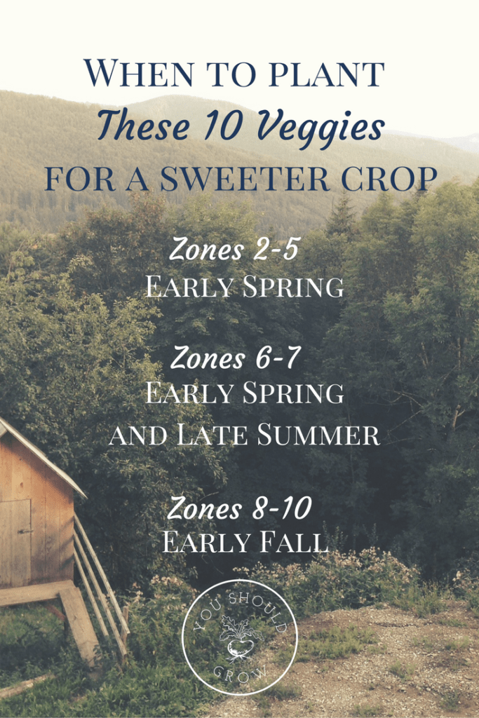 10 Frost Tolerant Vegetables To Grow In Fall Backyard 640 x 480