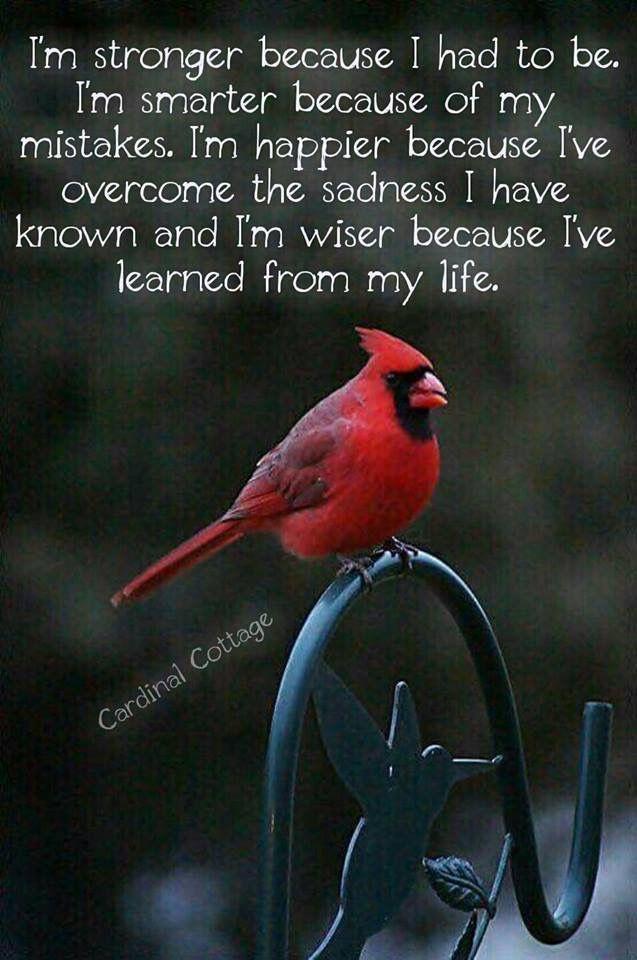 C C  flyer   us    Cardinal meaning, Cardinal birds meaning