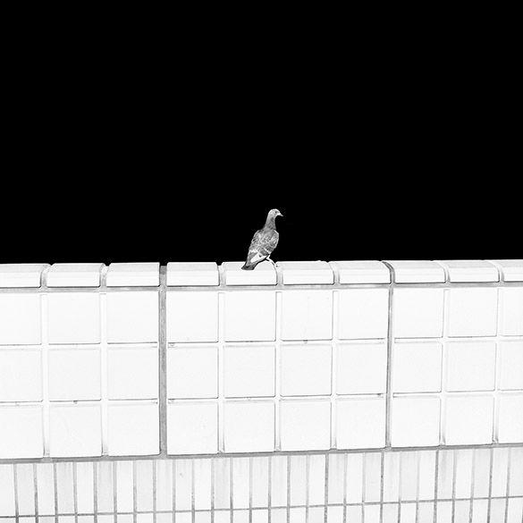 Anomalies - Mårten Lange