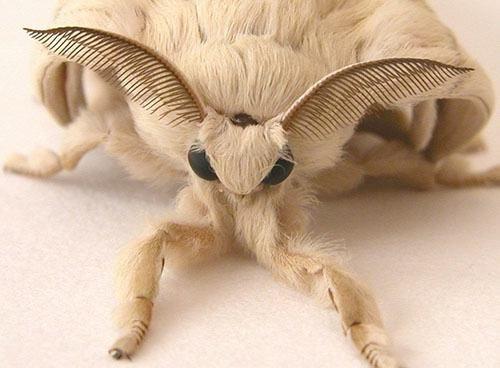Du Magst Keine Spinnen Und Motten Schauen Dir Diese An Sie Konnten Deine Freunde Werden Das Ist Kein Witz Schau Es Dir Selbst An Verruckte Tiere Libellen Kunst Spinnen Insekten