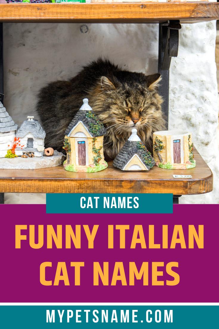 Funny Italian Cat Names In 2020 Cat Names Italian Humor Cats