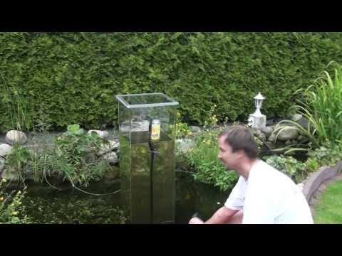 Mein koi aussichtsturm im gartenteich wie geht es los 2 for Aquarium fische im gartenteich