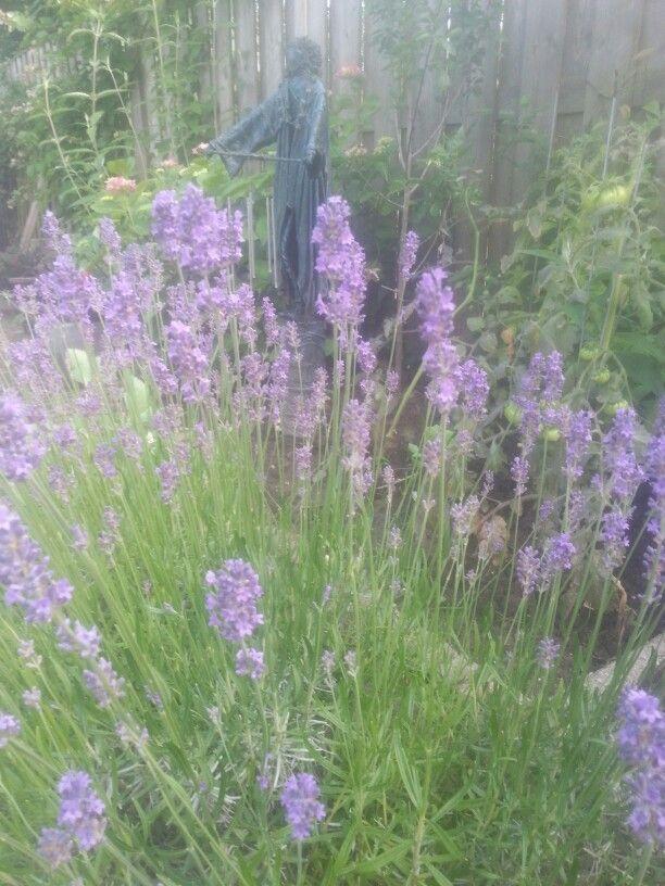 Lavendel 9/6/2014