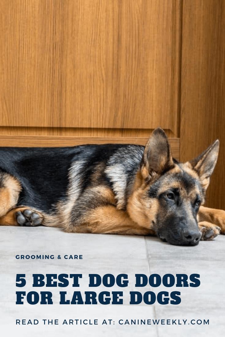 7 Best Dog Doors For Large Dogs In 2020 Best Dog Door Dog Door