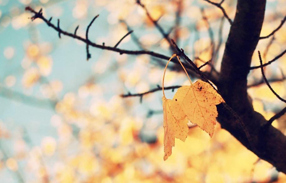 Autumn Tumblr Wallpaper Hd Fall Wallpaper Iphone Wallpaper Fall Cute Fall Wallpaper