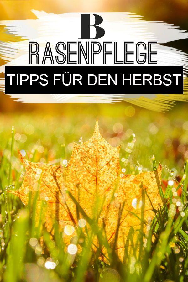 Rasenpflege Im Herbst Muss Das Sein Rasenpflege Rasen Pflanzen Pflege