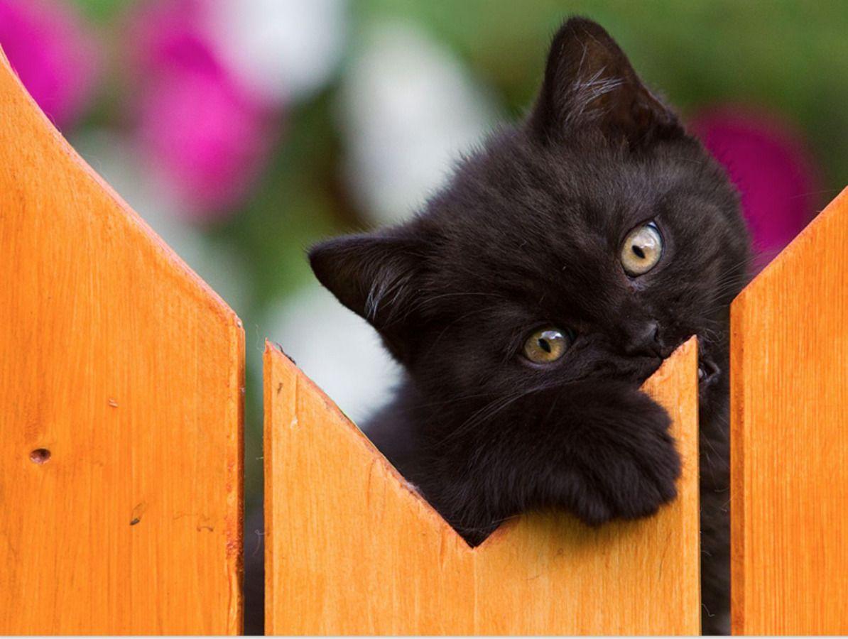 Picture of a Cute Cat Next Door