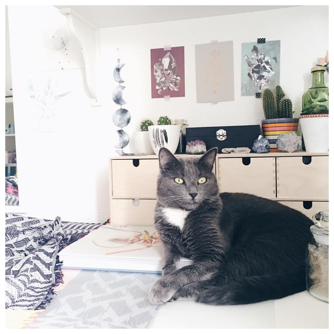 Shadow, mon petit chat qui me suit partout et qui a volé