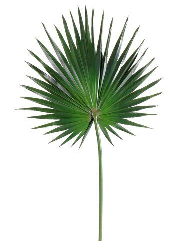 Decorating with Palm Fronds | Artificial palm leaves, Fan palm ...