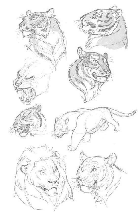 Image result for cat anatomy drawing | Animals | Pinterest | Cat ...