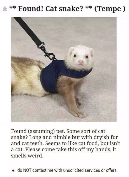 The Most Perfect Description Of A Ferret Funny Ferrets Animal