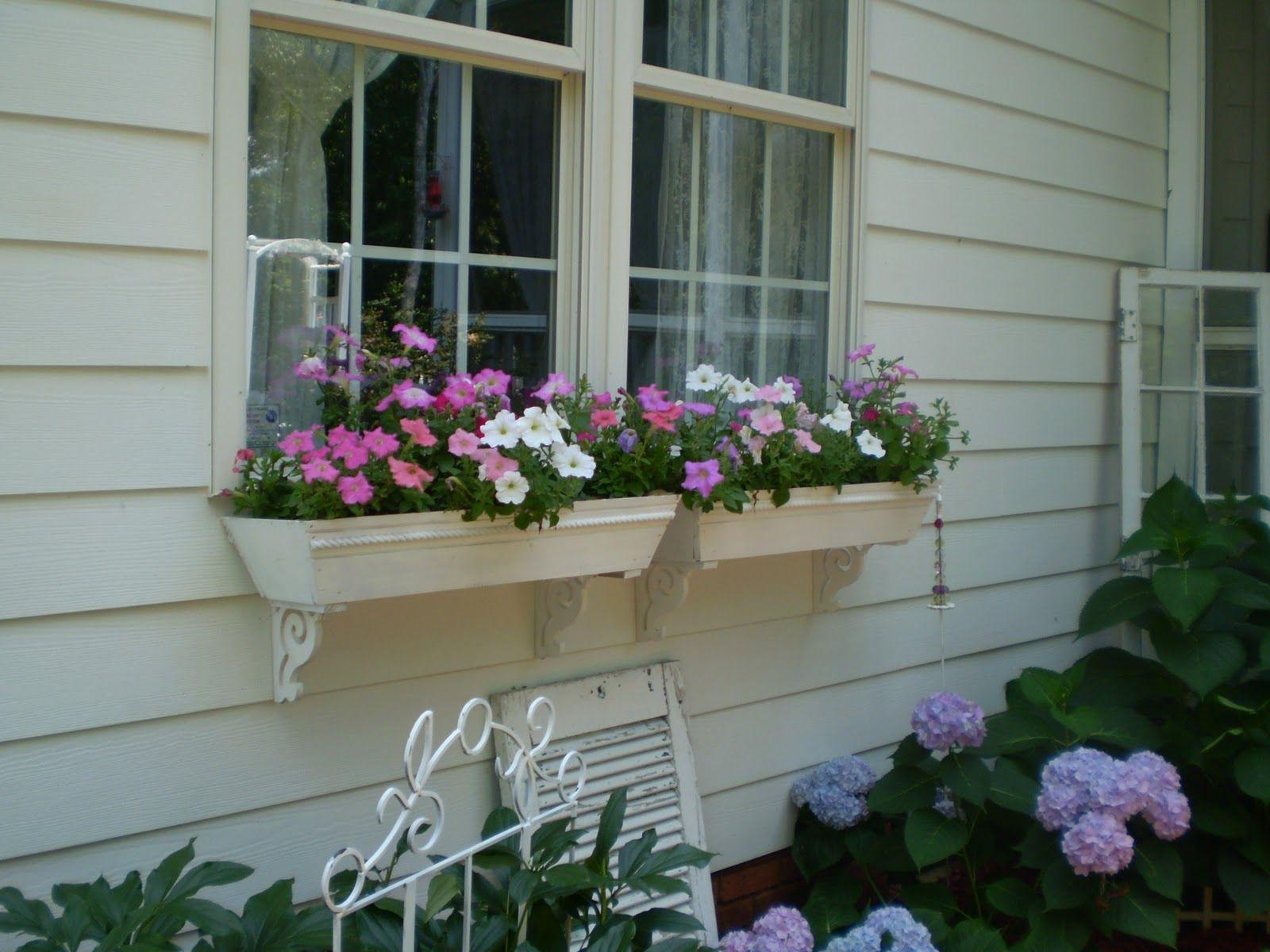 my+garden+063.JPG (1600×1200)